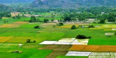 Terres cultivables en Inde.jpg