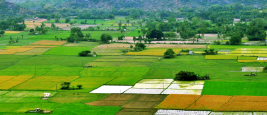 Terres cultivables en Inde