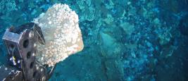 Underwater sampling